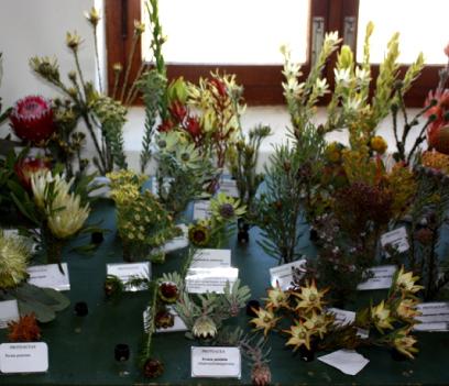 Flower-show-33