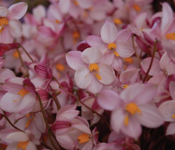 Flower-show-7